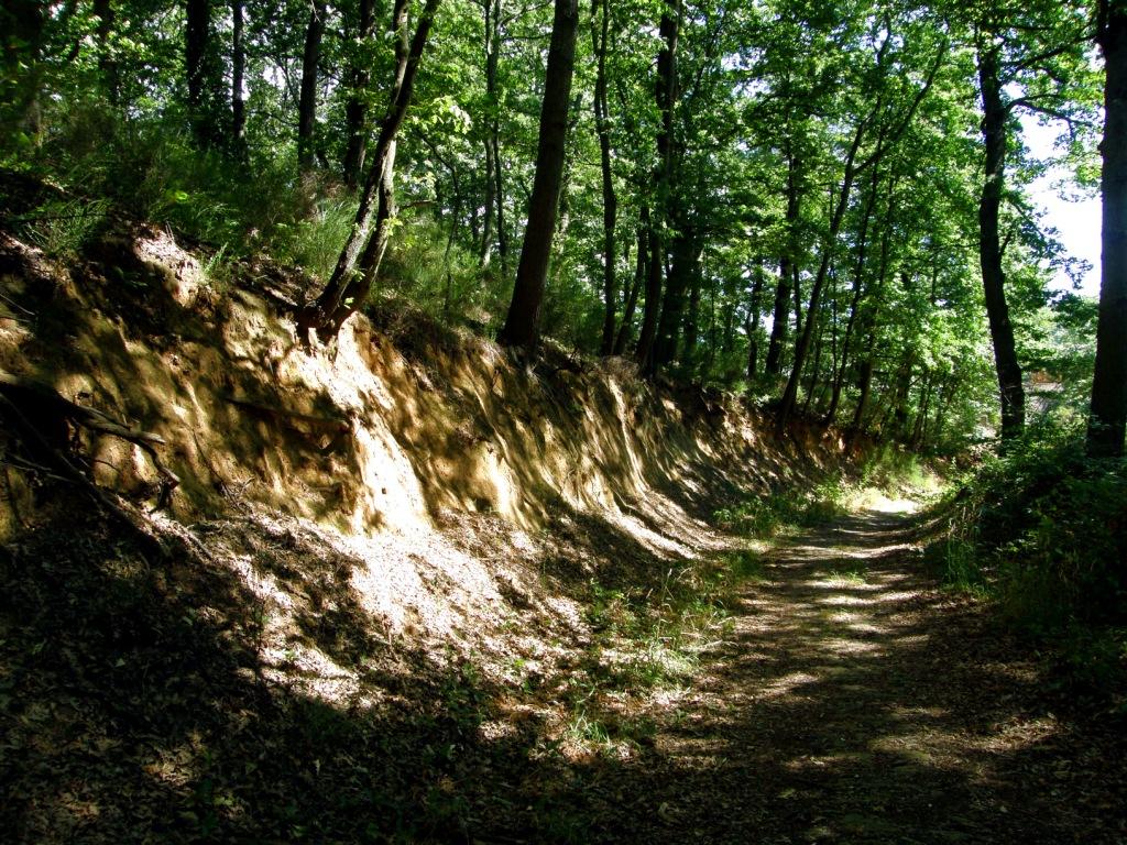 Gita nel bosco - 2 part 7