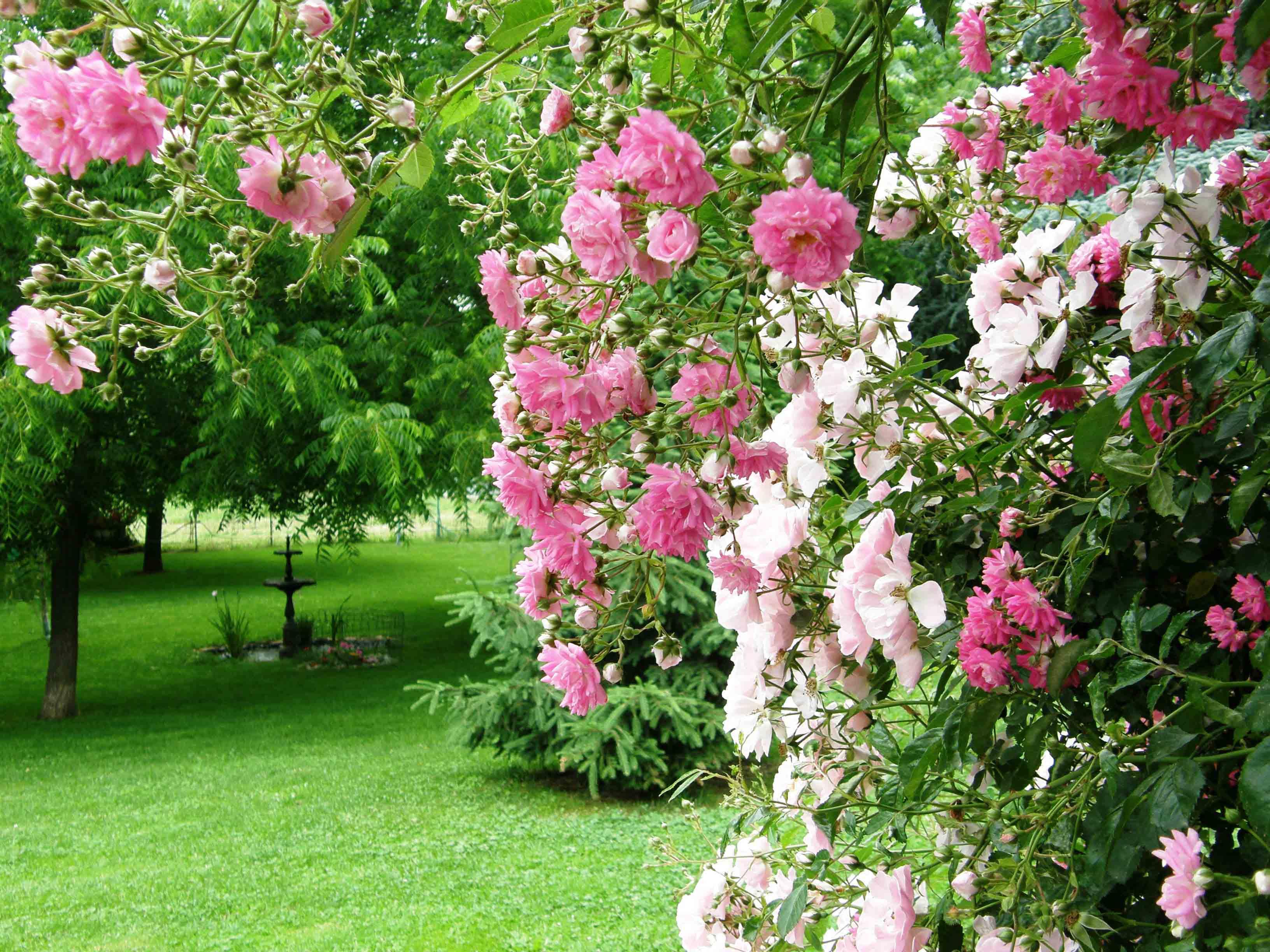 Il giardino - Foto di alberi da giardino ...